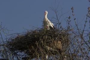 vogelpark_hedessheim_45